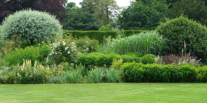 Simple Lawn Care & Maintenance Tips